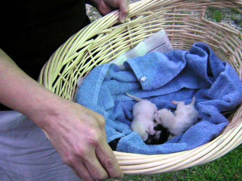 larger version