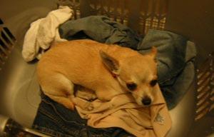 maude lebowski likes the laundry.